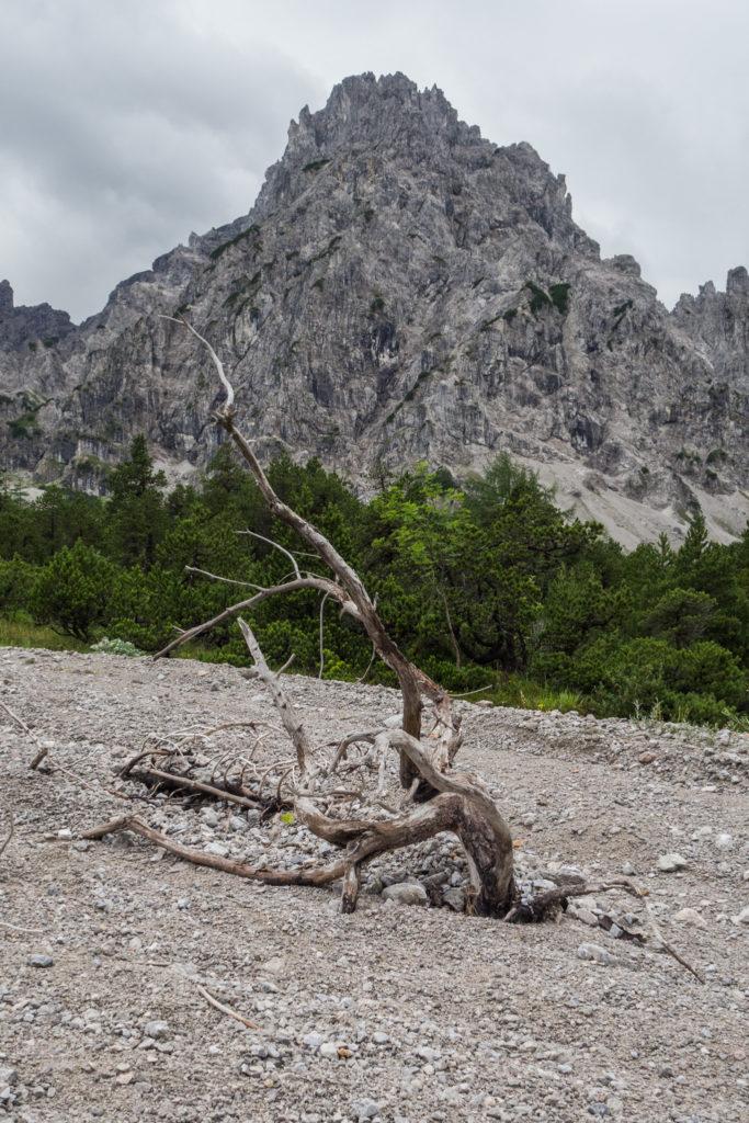 Das Bild zeigt eine große Baumwurzel mitten im klein gemahlenen, grauen Gesteinsschutt, auch Gries genannt. Dieser gibt dem Tal seinen Namen.