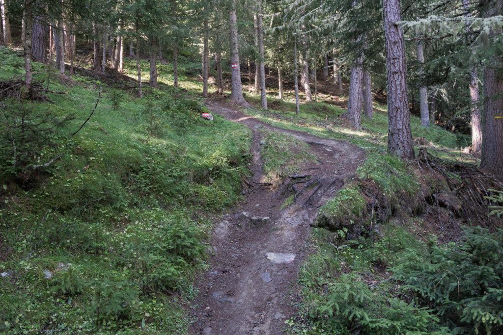 Auf dem Bild ist ein schmaler Weg mitten durch den Wald zu sehen.