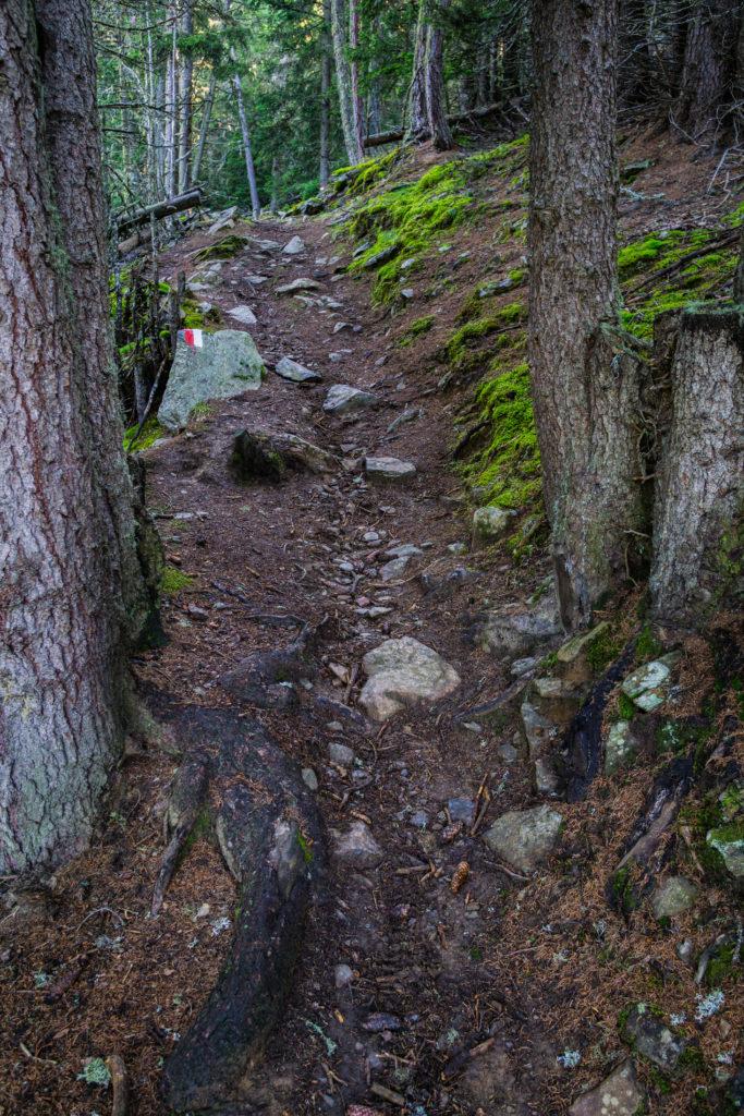 Das Bild zeigt den Weg durch den Wald auf der Wanderung zum Zerminiger.