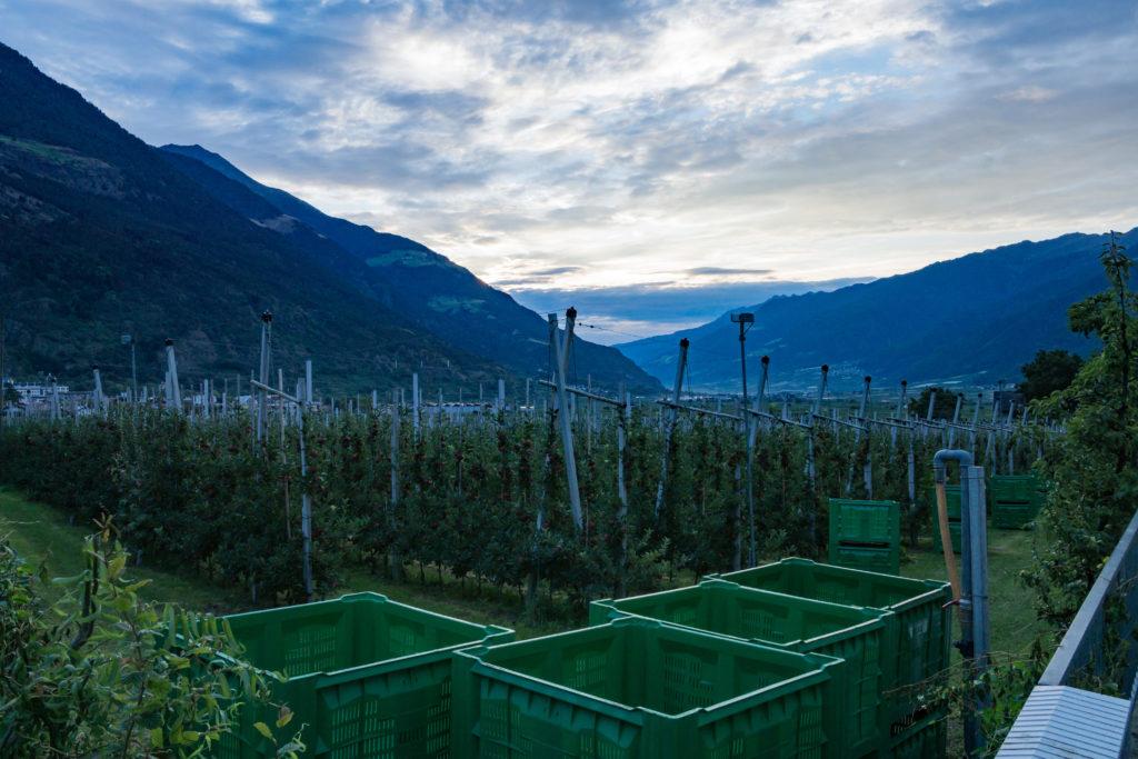 Blick Richtung Osten auf die Apfelplantagen von Schlanders.